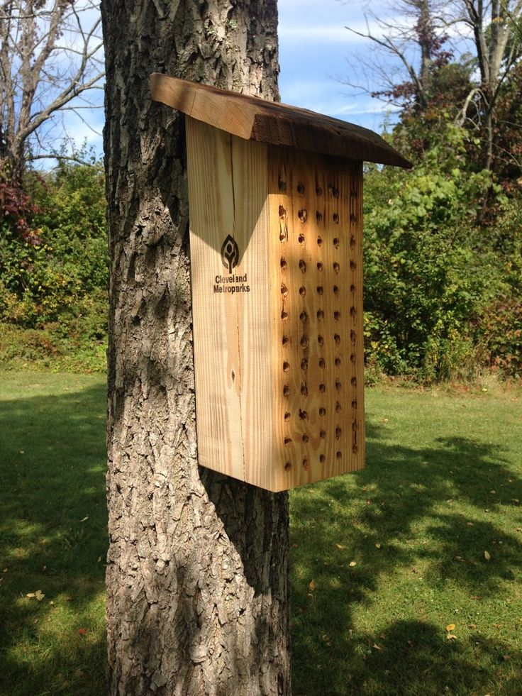 instructions on how to build a bat house